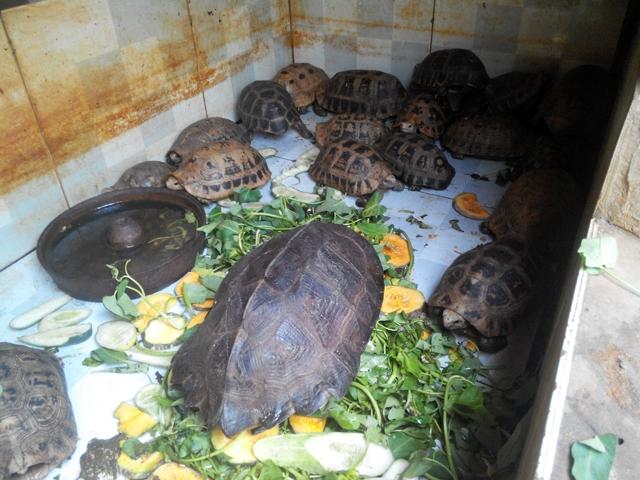 Dừng nhập khẩu động vật hoang dã, đóng cửa chợ mua bán động vật hoang dã bất hợp pháp -0