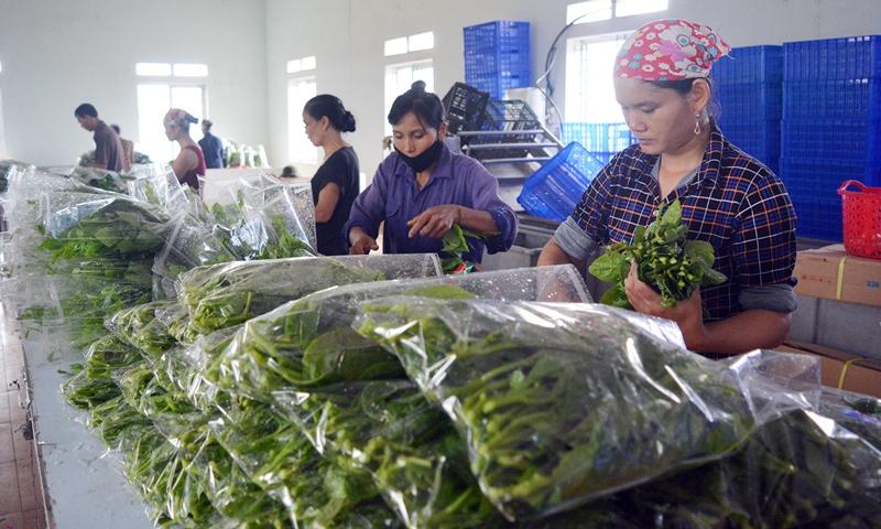 Đột phá về hạ tầng phát triển nông nghiệp ở Lâm Thao -0