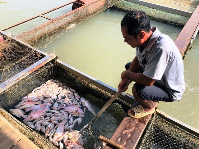 Cá bè trên sông Đồng Nai lại chết bất thường -0