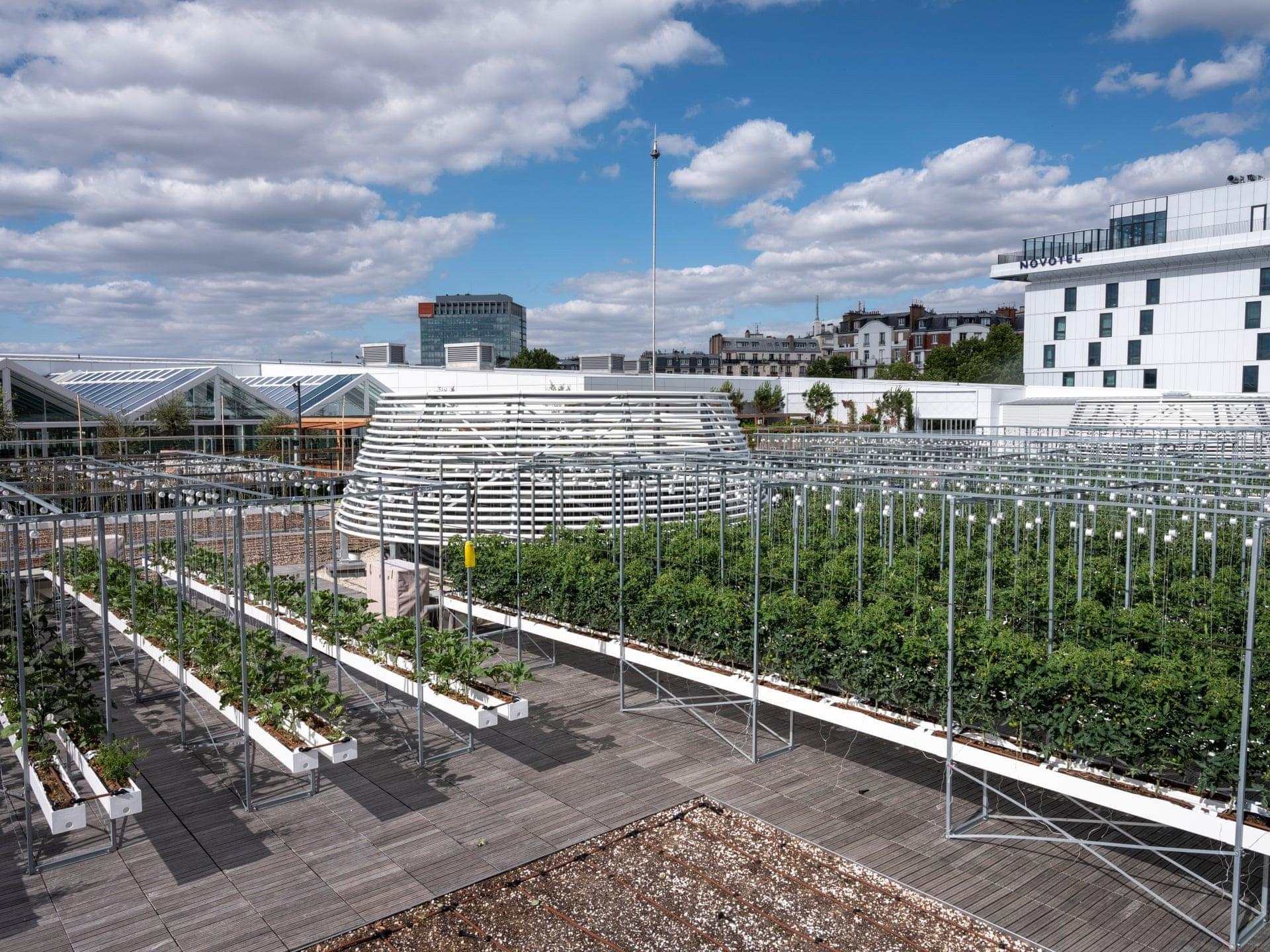 Bên trong nông trại đô thị trên mái nhà lớn nhất thế giới -0