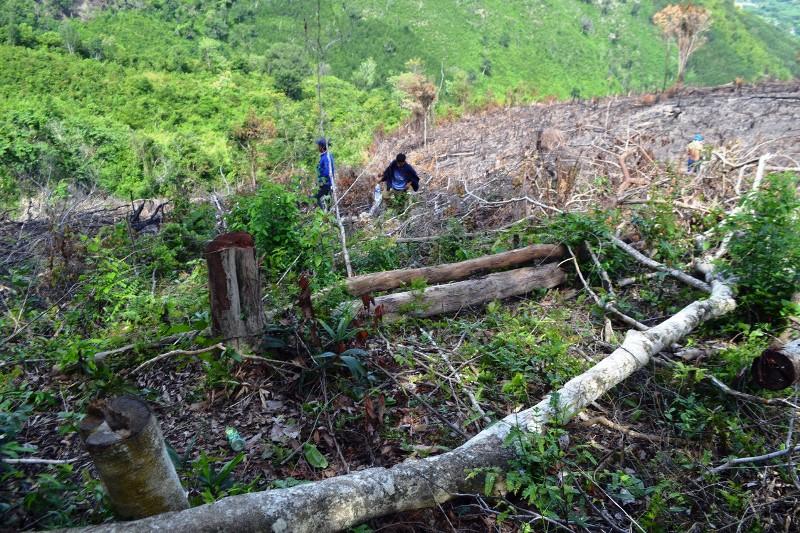 Khẩn trương ngăn chặn nạnphá rừng ở xã vùng caoPhú Yên -0