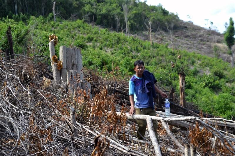 Khẩn trương ngăn chặn nạnphá rừng ở xã vùng caoPhú Yên -1