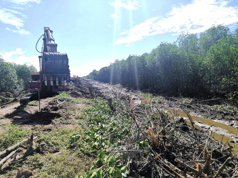 Sóc Trăng: Phát hiện doanh nghiệp phá rừng phòng hộ ven biển với quy mô lớn