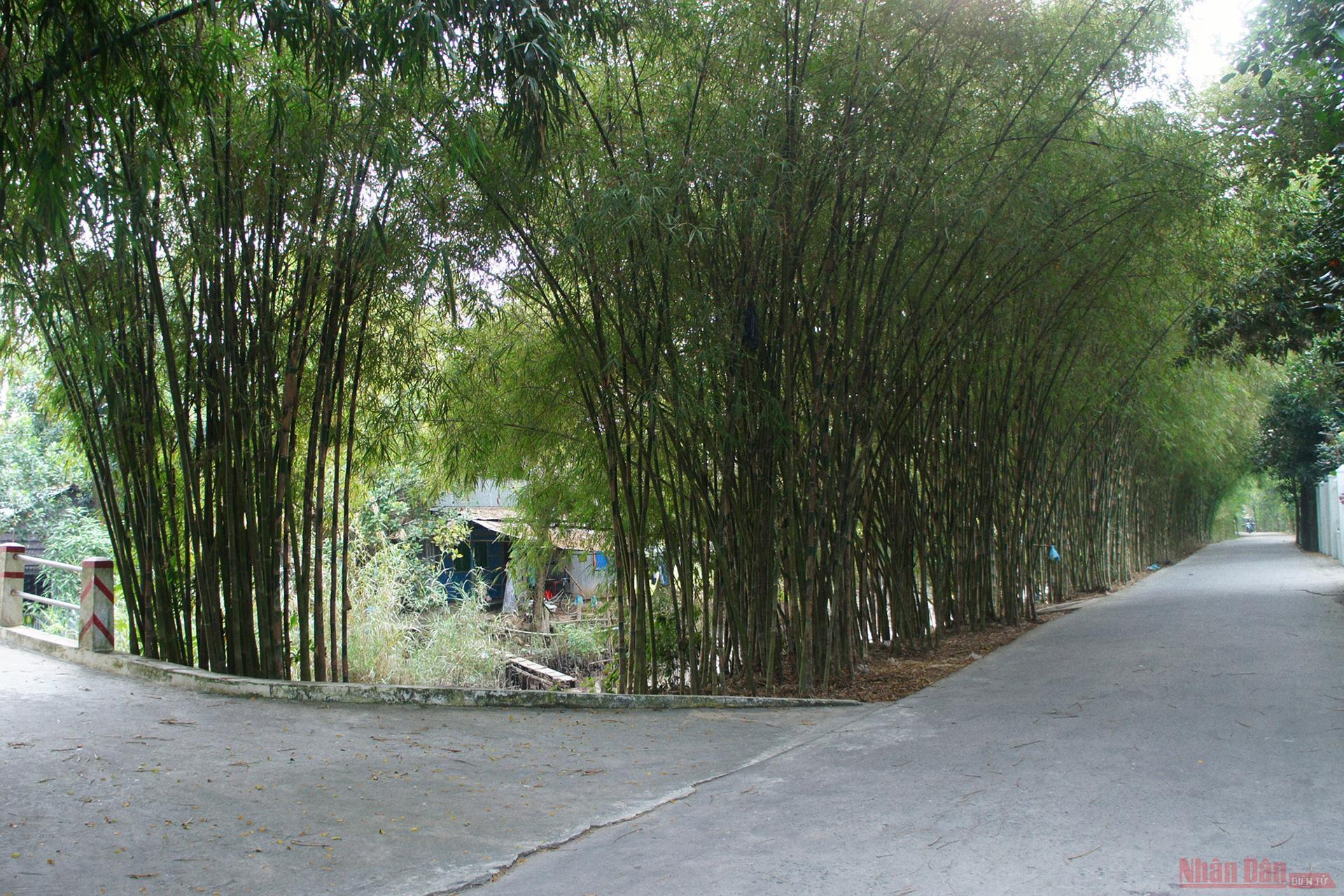 Vườn cò Bằng Lăng - sân chim lớn nhất đồng bằng sông Cửu Long -0