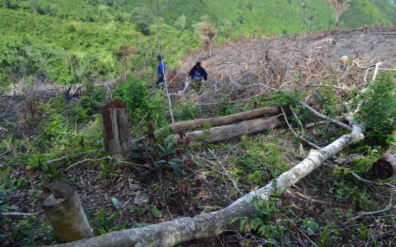 Thông tin phản hồi vụ phá rừng tại xã Phú Mỡ -0