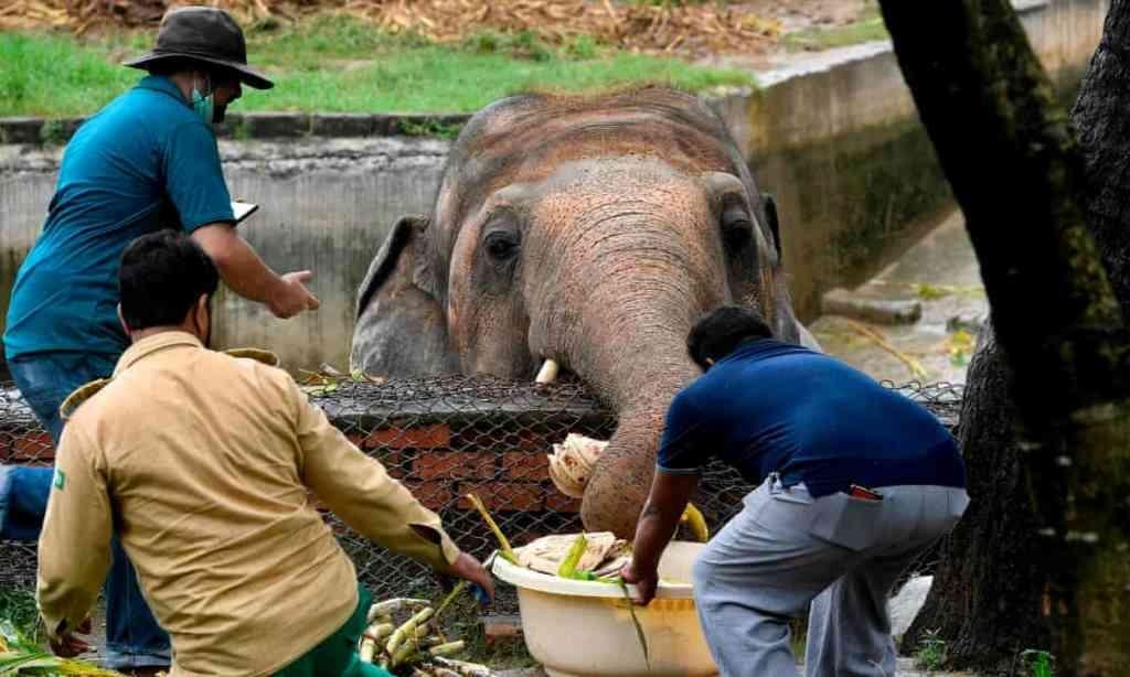 Chú voi đơn độc nhất thế giới sắp được trở về châu Á -0