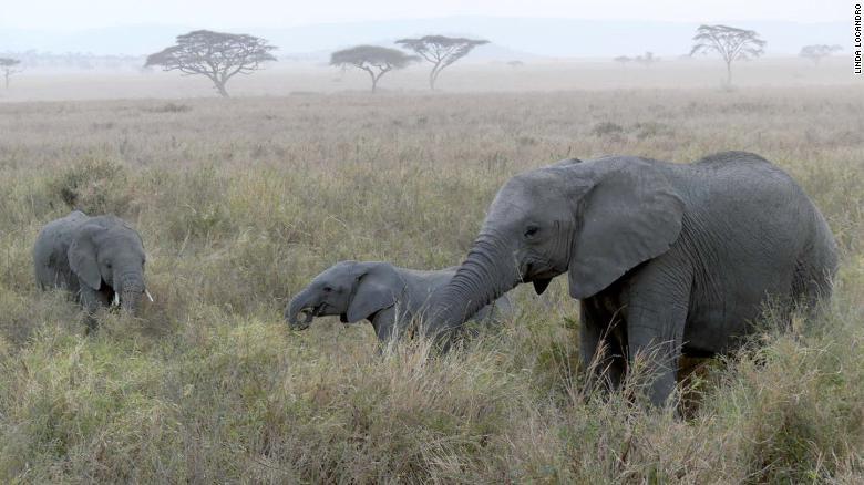 WWF: Hành tinh chúng ta đang phát tín hiệu đỏ -0