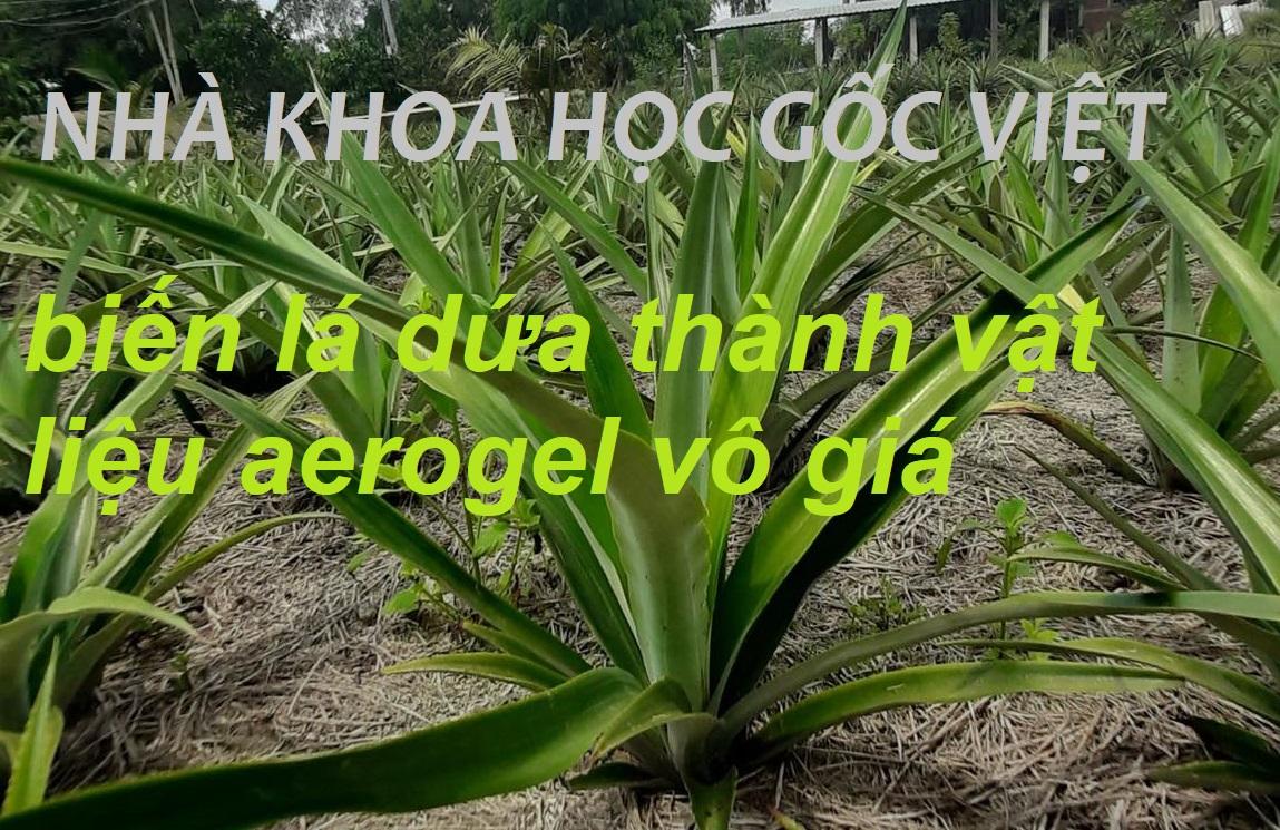 Nhà khoa học gốc Việt biến lá dứa thành chất vật liệu aerogel vô giá