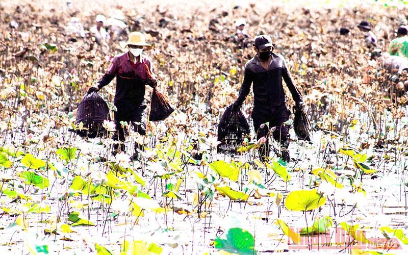 Độc đáo lễ hội phá trằm bắt cá ở Quảng Trị -0