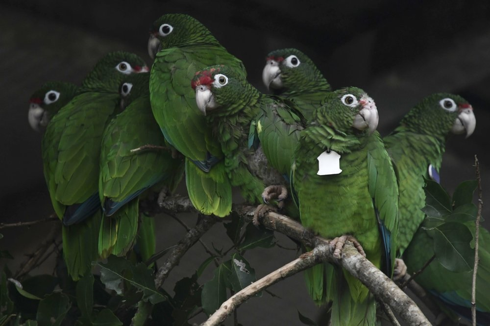 Nỗ lực bảo tồn đã ngăn chặn hàng chục loài khỏi nguy cơ tuyệt chủng -0