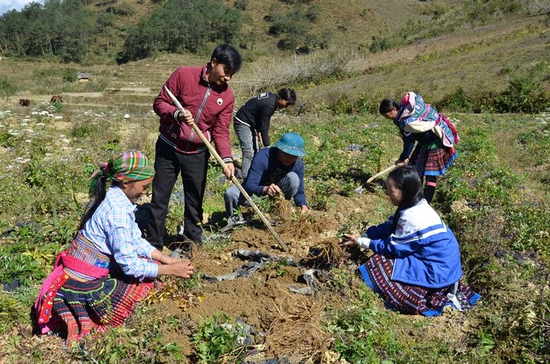 Phát huy hiệu quả sau đào tạo nghề cho lao động nông thôn ở Sìn Hồ -0