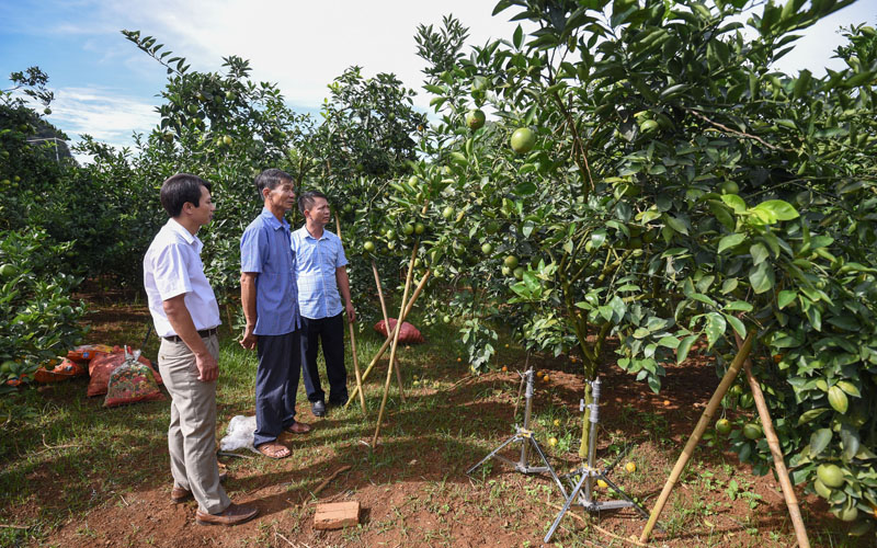 Nhà máy chế biến hoa quả tươi và thảo dược hiện đại nhất ở Sơn La đi vào hoạt động -0