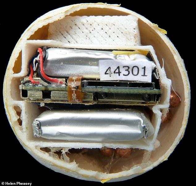 Trứng rùa giả in 3D giúp vạch trần đường dây bất hợp pháp -0