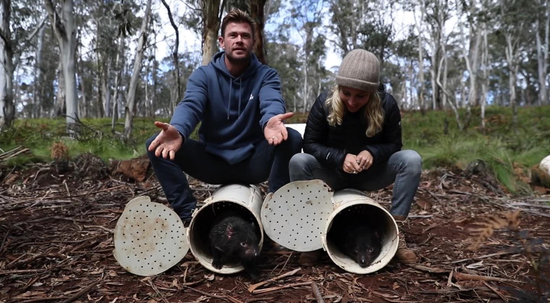 Quỷ Tasmania lần đầu tiên được thả về rừng sau 3.000 năm -0