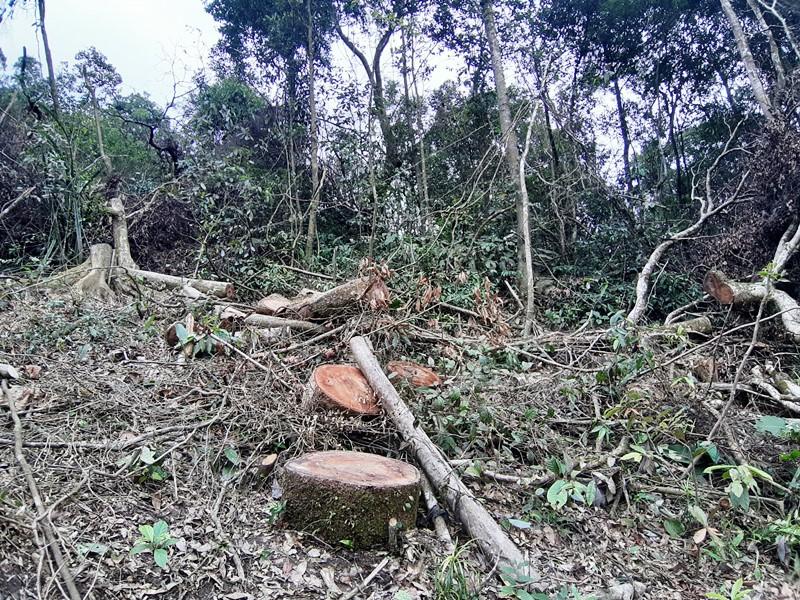 Ngang nhiên mở đường, phá rừng tự nhiên ở Bắc Kạn -0