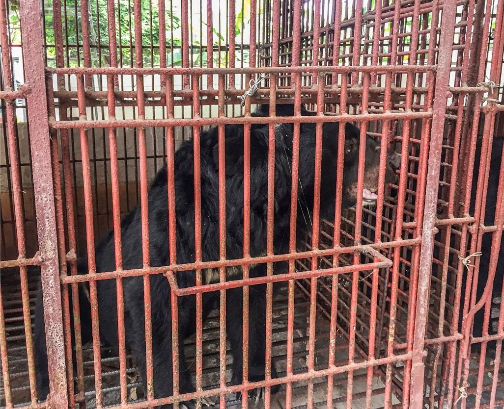 Cứu hộ thành công bảy cá thể gấu ở Bình Dương -0