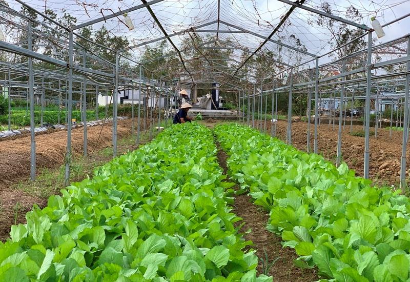 Nông dân Đà Nẵng nhanh chóng khôi phục sản xuất -0