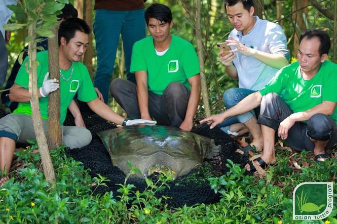 Xác định giới tính rùa Hoàn Kiếm ở hồ Đồng Mô để bảo tồn -0