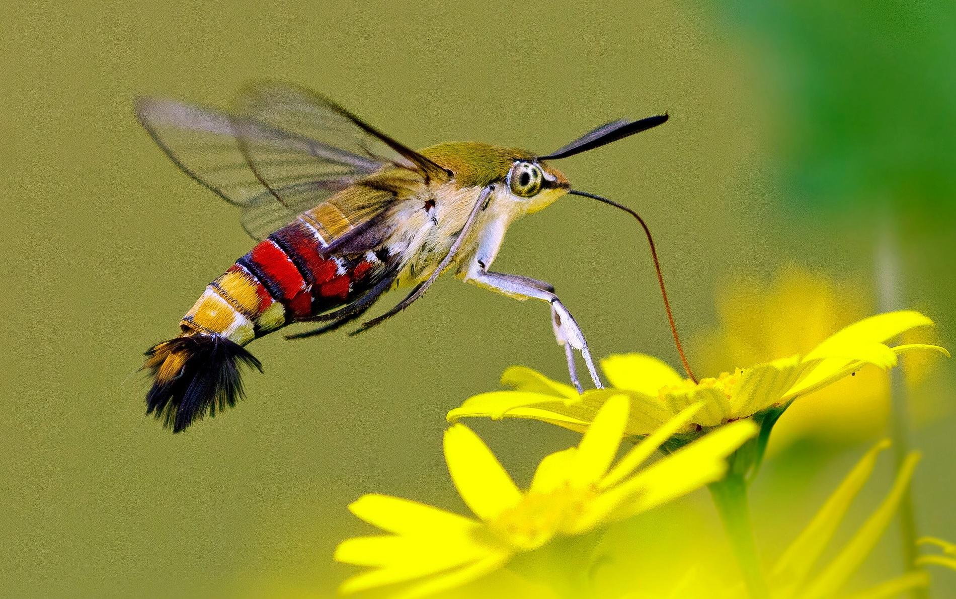 Sáu sinh vật kỳ diệu có thể nhìn xuyên thấu -0