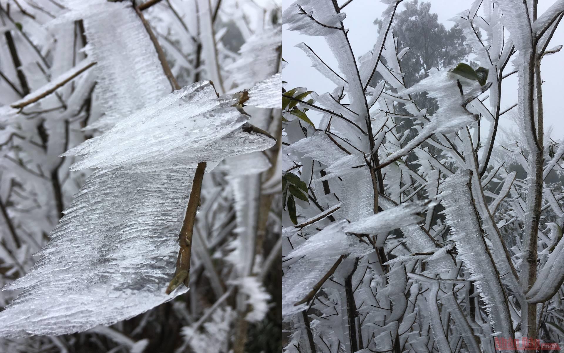 Cận cảnh băng tuyết phủ trắng rừng già Y Tý -0