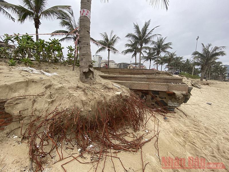 Đà Nẵng tìm giải pháp nhằm hạn chế xói lở bờ biển -0