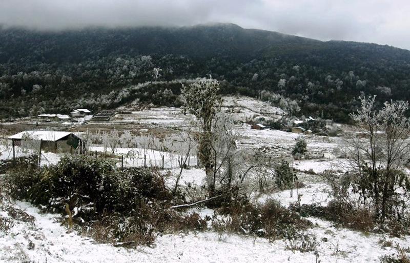 Nhiều gia súc bị chết rét vì băng tuyết ở Lào Cai -0
