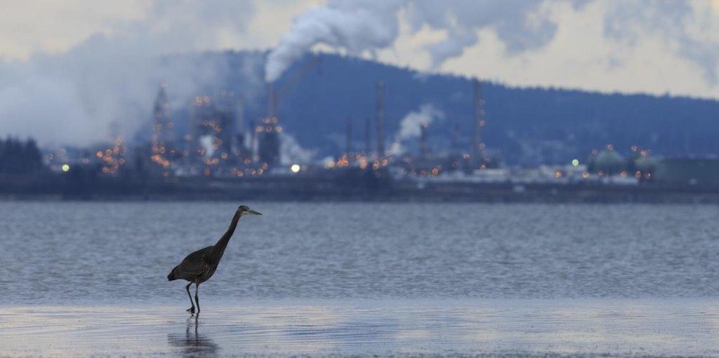 Mỹ: Giảm ô nhiễm ozone đã cứu hơn 1,5 tỷ con chim trong bốn thập kỷ -0