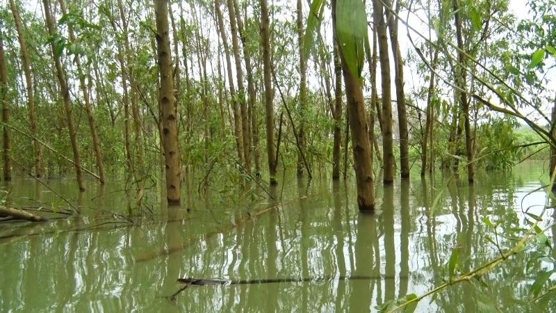 Mức nước hồ Tả Trạch dâng cao, hàng trăm hộ dân bị ảnh hưởng -0