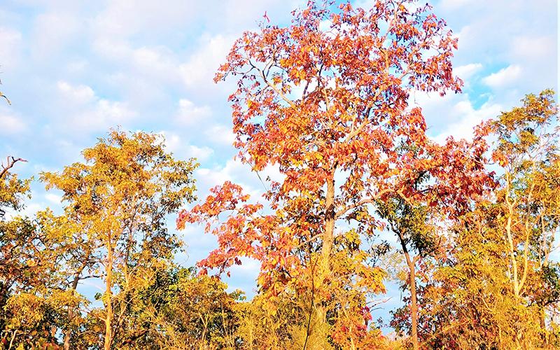 Mê hoặc rừng khộp mùa thay lá -0