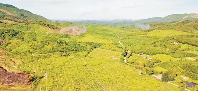 Việt Nam sẽ đứng tốp đầu thế giới về thảo dược -0