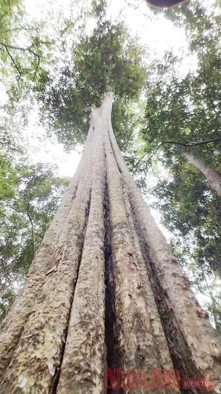 Bài 2: Giữ rừng săng lẻ - niềm tự hào của xứ Nghệ -0