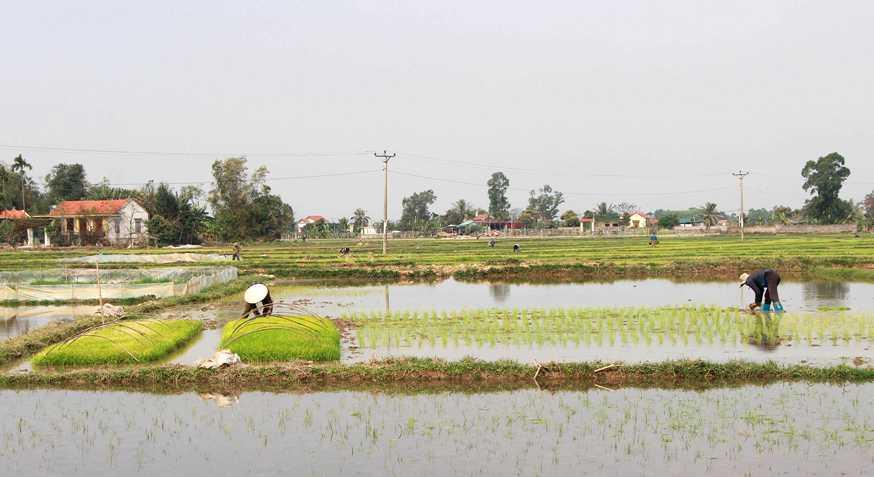 Nông dân Quảng Ninh tích cực sản xuất vụ đông xuân -0