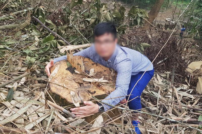 Ngang nhiên phá rừng đặc dụng tại Vườn quốc gia Xuân Sơn -0