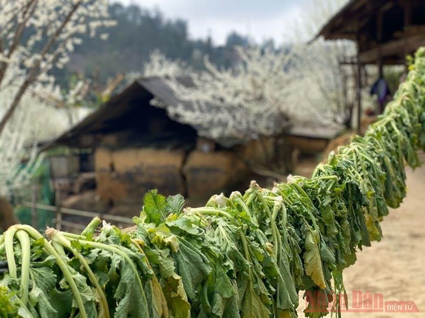 Hoa mận Bắc Hà: mùa xuân còn sót lại -0