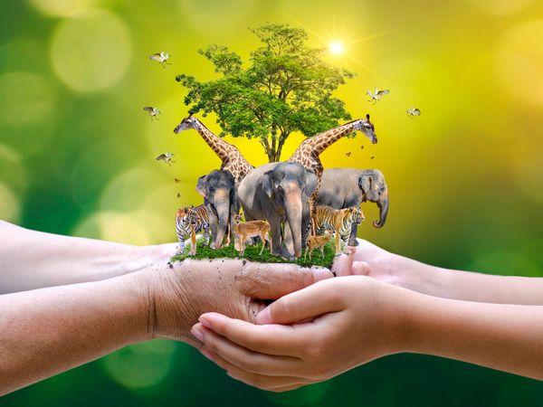 Ngày Động, thực vật hoang dã thế giới năm 2021: Bảo vệ rừng và sinh kế -0