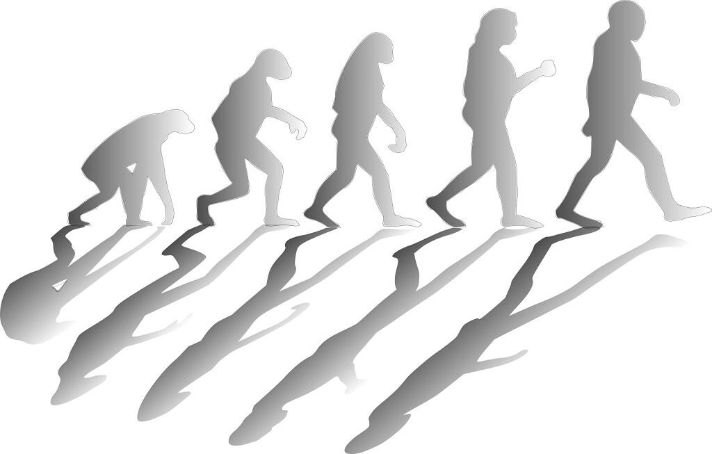 Loài người tiến hóa để tiết kiệm nước hơn các loài linh trưởng -0