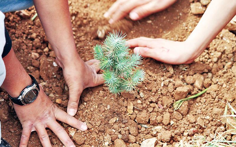 Làm giàu rừng cho muôn đời sau -0