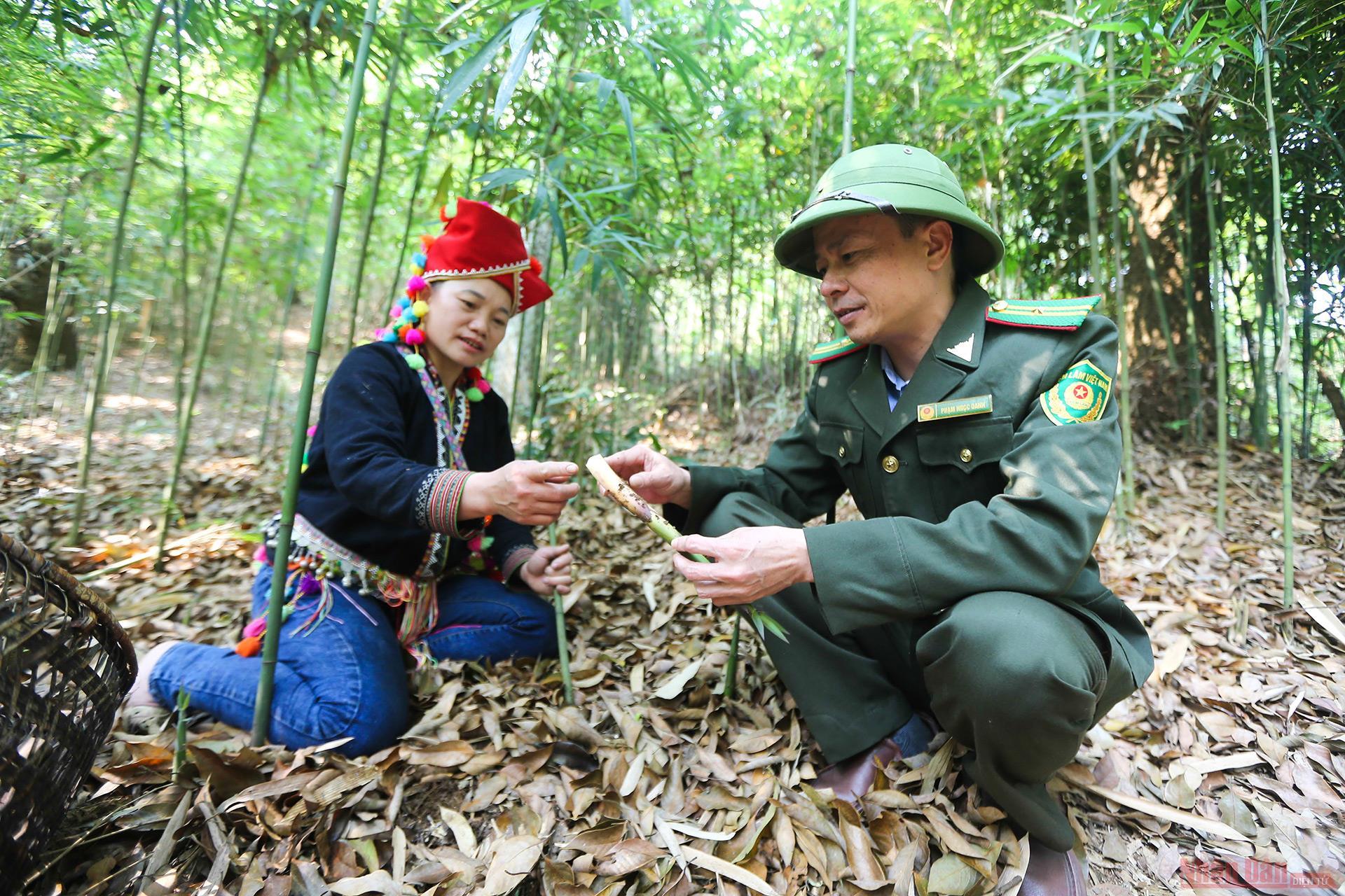 10_mang_sat_Hoang_Lien_Son-1618220184847.jpg