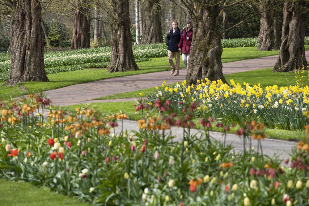 Hà Lan chào đón du khách vườn hoa nổi tiếng Keukenhof -0