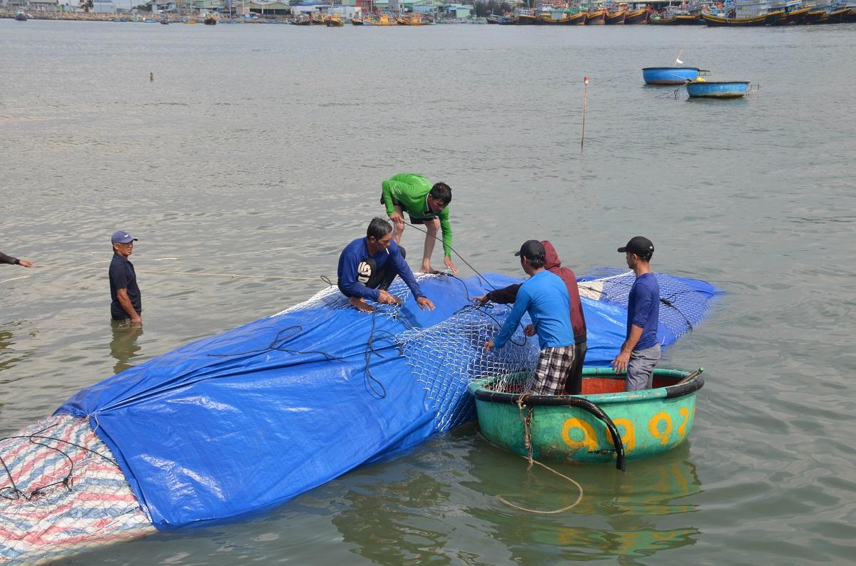Cá voi dài 16 mét, nặng hơn sáu tấn chết ở vùng biển Bình Thuận -0