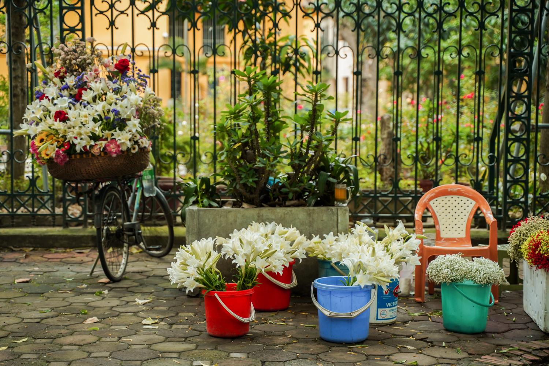 Sắc hoa loa kèn ngày cuối mùa -0