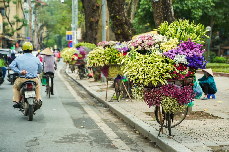 Sắc hoa loa kèn ngày cuối mùa -3
