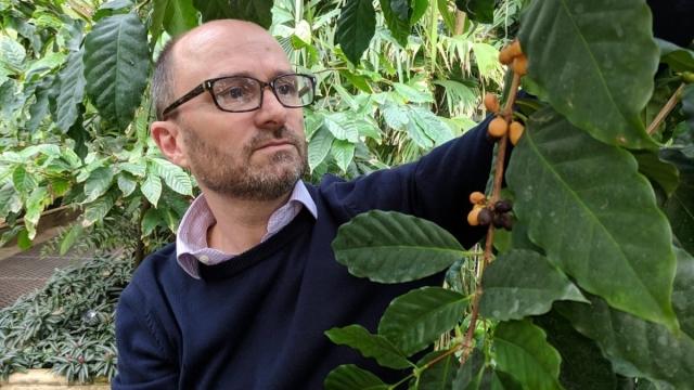 Tái phát hiện một loài cà phê bị lãng quên nhiều thập kỷ -0