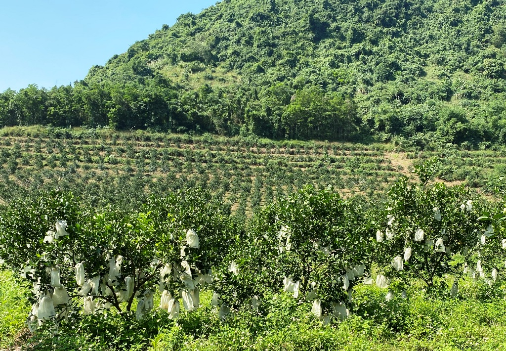 Bài 3: Bài học phát triển nông nghiệp bền vững -0