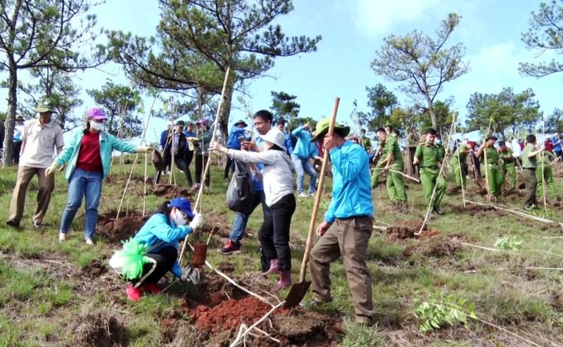 Lâm Đồng phát động trồng 50 triệu cây xanh -0
