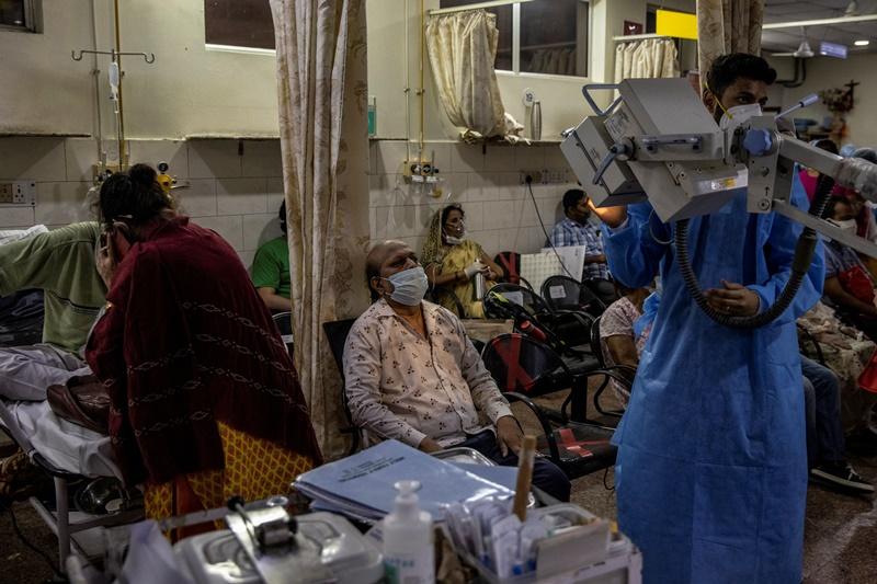 Ấn Độ cảnh báo về bệnh nấm đen và phương pháp chữa Covid-19 bằng chất thải của bò -0