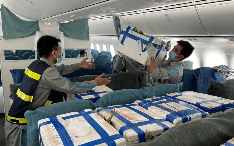 """Vải thiều Bắc Giang """"ngồi"""" ghế siêu máy bay vào TP Hồ Chí Minh -0"""