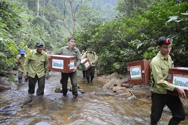 """Nhà bảo tồn tê tê người Việt giành giải thưởng """"Nobel xanh"""" danh giá thế giới -0"""