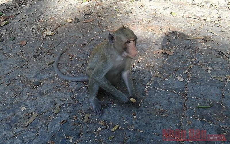 Sau 3 ngày giãn cách, khỉ, sóc tung tăng trên đường phố Vũng Tàu -1