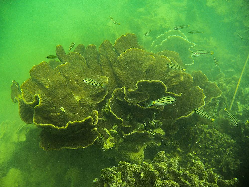 Chiêm ngưỡng san hô hồi sinh trong lòng di sản Vịnh Hạ Long -0